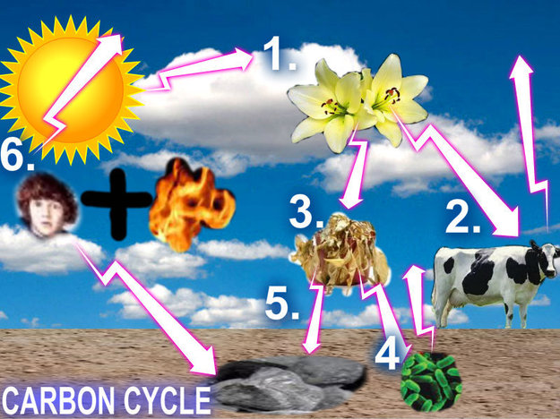Carbon Cycle What Happens